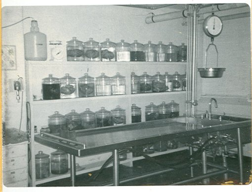 Brains at the HCGH Morgue, 1960s